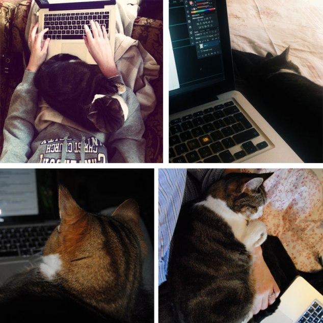 laptop_bon
